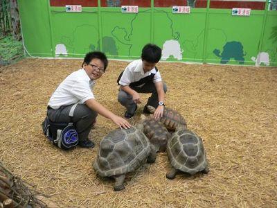 معرض الزواحف النادرة فى هونغ كونغ + صور