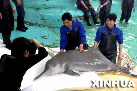 Китайский озерный дельфин.