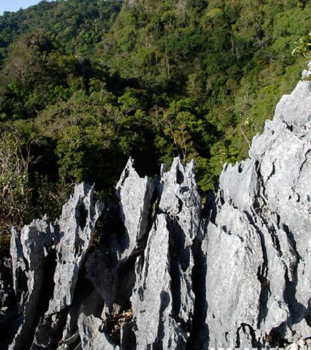Karst Tropical Rainforest Found in Hainan -- china.org.cn