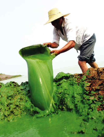 Chaohu China  city pictures gallery : Taihu, Chaohu Again Hit by Algae Outbreaks china.org.cn