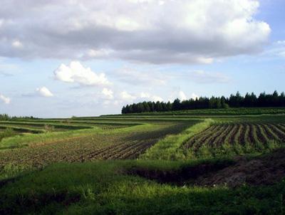 Black soil erosion threatens granary for Soil 60 years