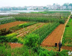 China: One-Fifth Of Farmland Is Polluted - Business Insider  |China Farmland