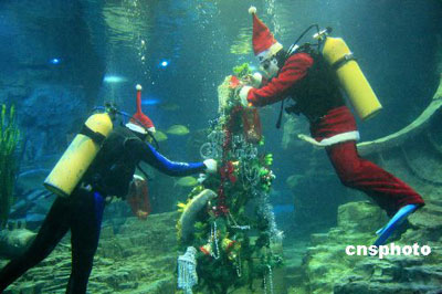 Underwater Celebration Ready For Christmas China Org Cn