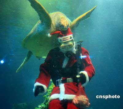 Underwater celebration ready for christmas for Aquarium christmas tree decoration