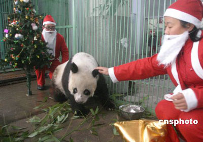 Animals Enjoy A Merry Christmas China Org Cn