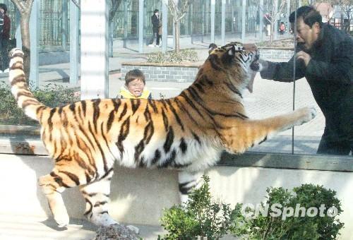 苏州动物园内的许多动物纷纷来到笼舍外的草坪上,或结伴玩耍、或图片