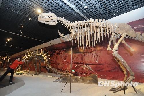 中国恐龙化石展在杭州展出