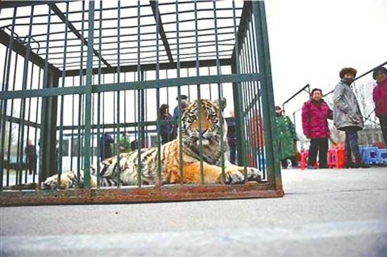 郑州动物园带老虎讨债