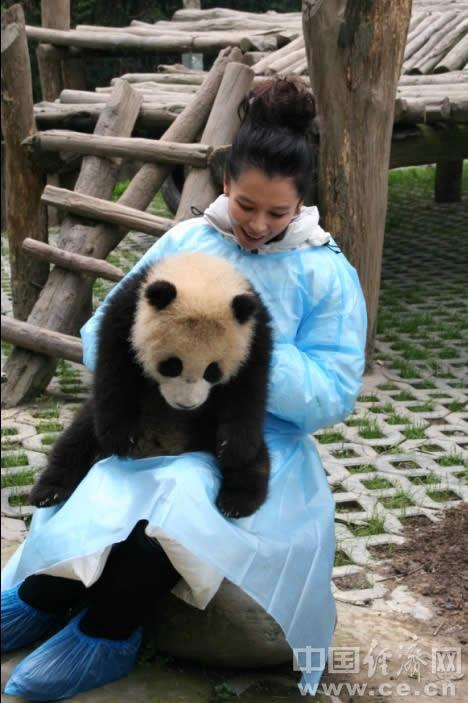 徐若瑄很受感动,仔细向工作人员询问起基地这些可爱大熊猫的生活状况