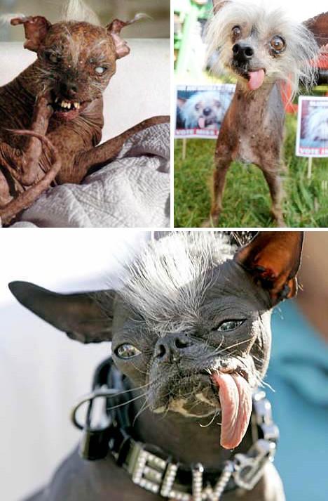 世上最丑的小狗-世界上最丑陋的13种动物图片