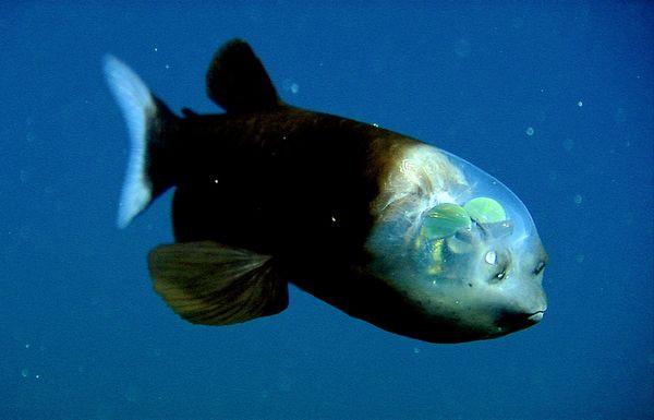壁纸 动物 海底 海底世界 海洋馆 水族馆 鱼 鱼类 600_385