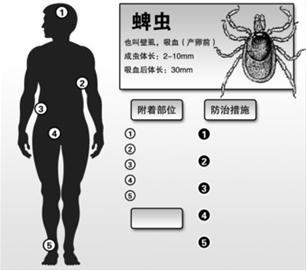 诊断疗效乐观,预防需加强野外防 记者采访了申城传染病领域的权威