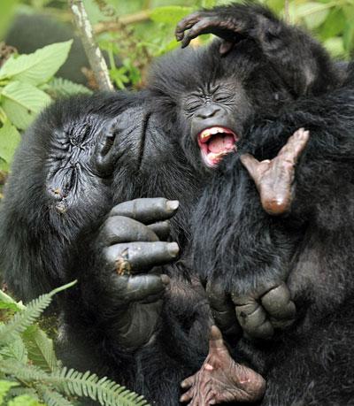 小猩猩可爱头像