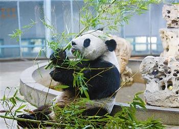 天气渐冷,天津动物园的许多动物在温暖的馆舍里悠闲自得.(记者 图片