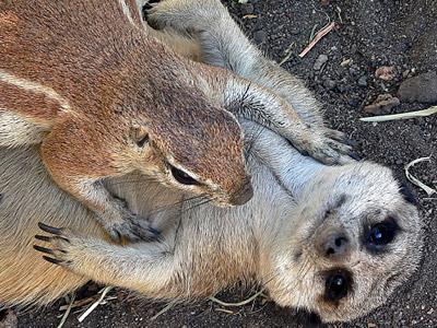 两只松鼠图片大全可爱