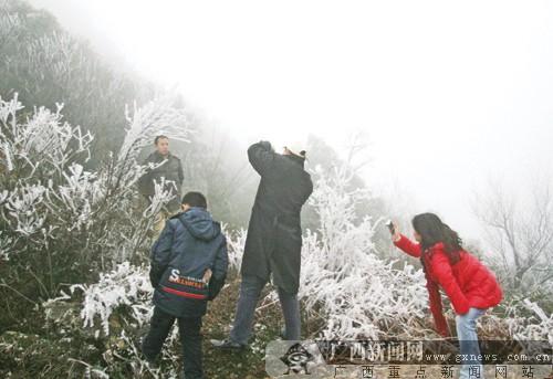 大明山雾凇奇观吸引不少游人