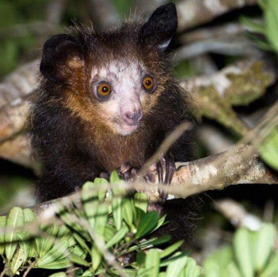 绝无仅有 马达加斯岛上珍惜奇异的物种 - 天涯游子 - 天涯游子