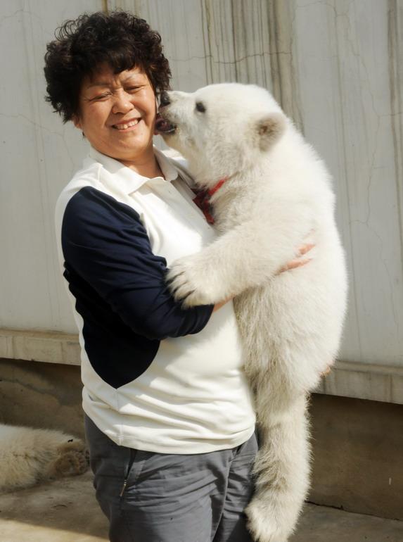 4月25日,大连老虎滩海洋公园的饲养员李黎开心地抱起一只北极熊幼仔.
