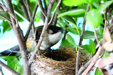 梦见鸟儿筑巢