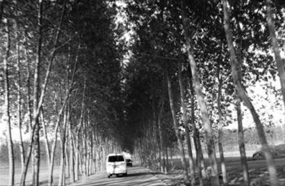 护林带长度达1948公里,基本实现封闭合龙. (宋澍 摄)   新闻