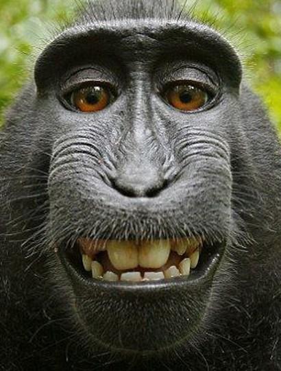 有猴子笑的照片