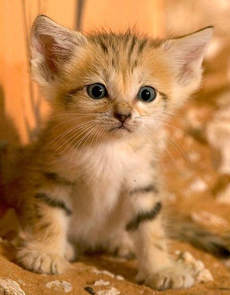 全球动物园20只最可爱的幼崽宝宝