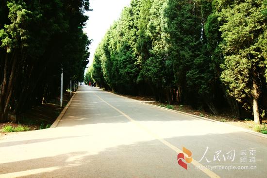 昆明高校 情人坡 云南农业大学图片