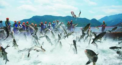 第二届中国杭州千岛湖有机鱼文化节暨有机渔业科技文化展日前在杭州