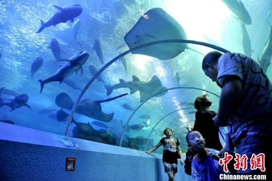 青岛海底世界美人鱼_青岛海底世界人鱼同乐