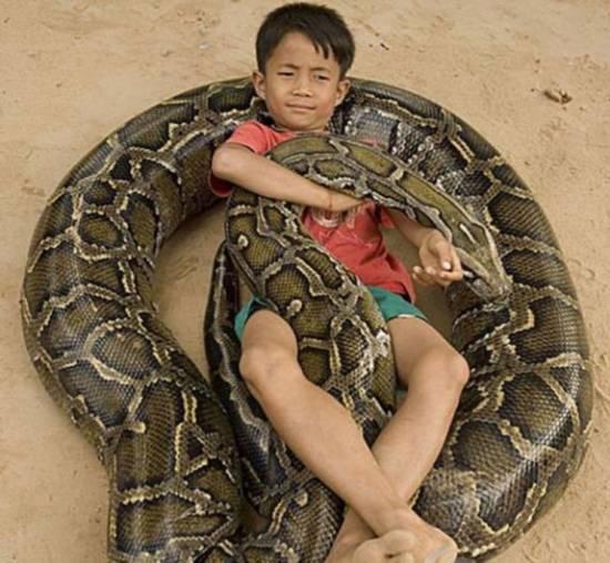 奇人 7岁小男孩竟拿巨蟒当宠物