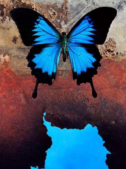 ...大多数国家都能看到蓝豆娘它们是野生动物摄影师最喜欢的动...
