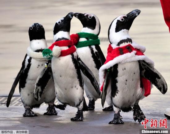 围观:2011动物图片展_新闻台_中国网络电视台