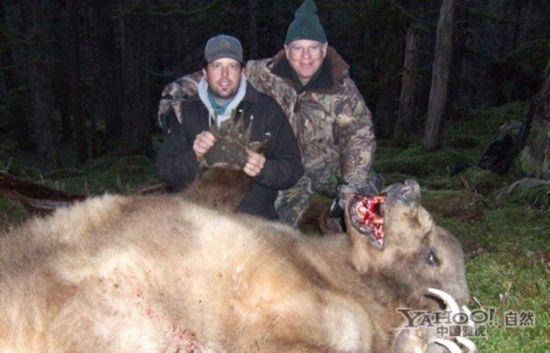 """如此庞然大物都为之胆寒的""""猎熊杀手""""图片"""