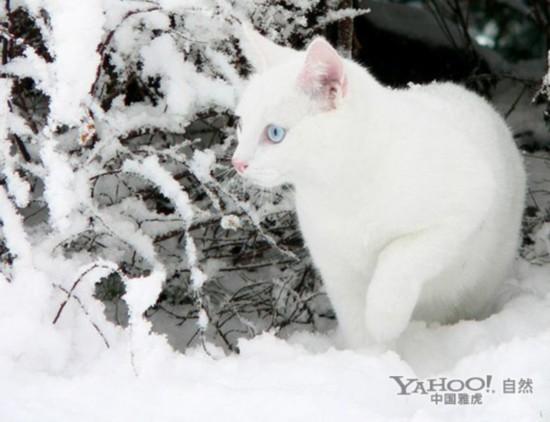 雪中可爱qq头像