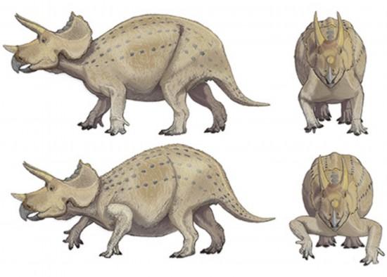 新方法解秘恐龙如何站立