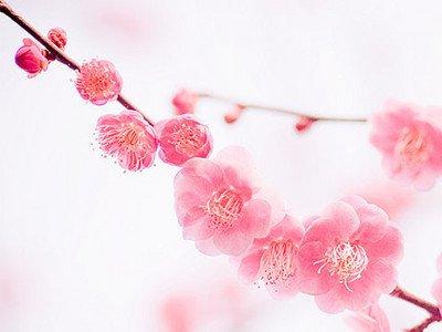 春意盎然又一年 三月斩桃花风水布局