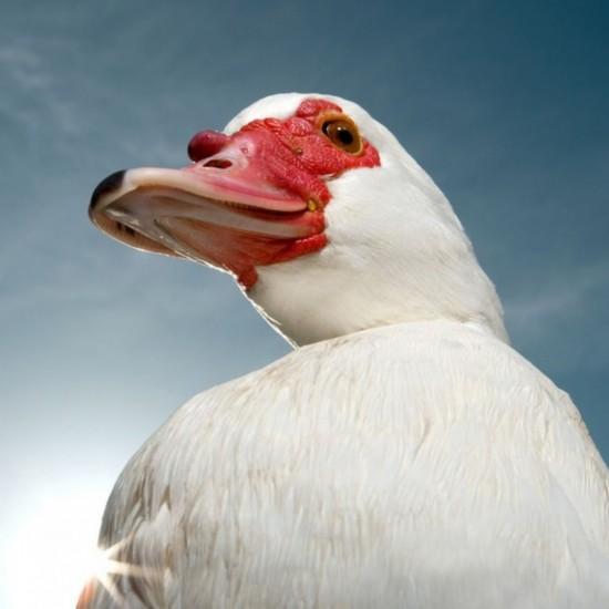 动物的高贵气质被摄影师别样生动地以不一样的拍摄手法展现出来.