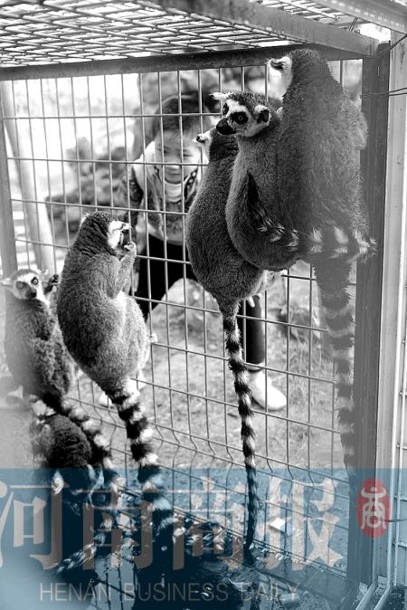 郑州/郑州市动物园,来了新成员