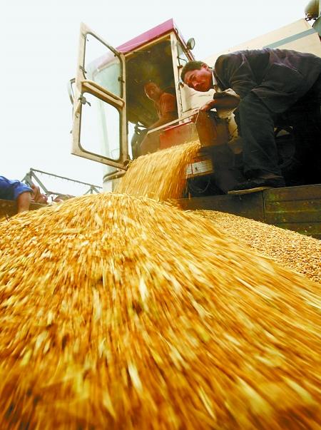 河南日收割小麦突破500万亩 已收割2272万亩