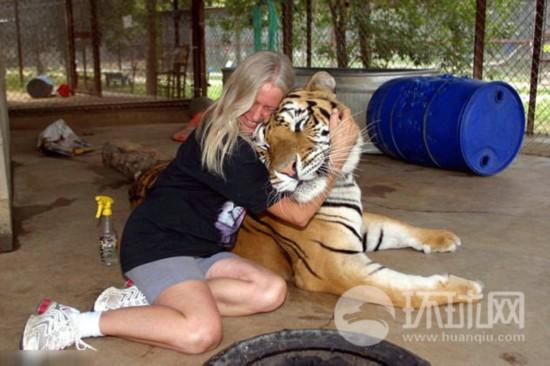 宠物老虎比野生老虎多