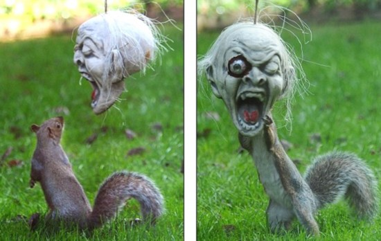 恐怖 当松鼠遇上万圣节面具