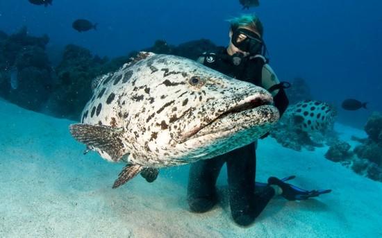 探寻大堡礁神秘的海底世界