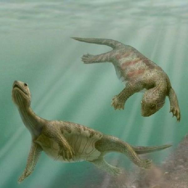 这种飞行爬行动物名叫darwinopterus modularis,它的化石表明,这种