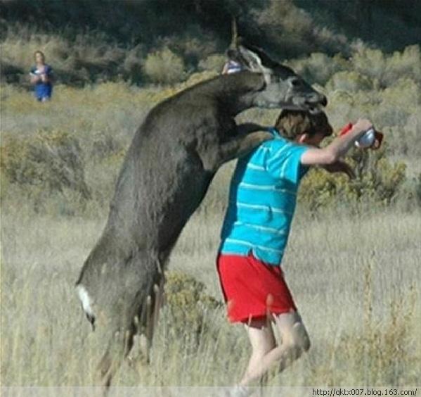 发情动物的疯狂荒唐事:大象与犀牛交配图