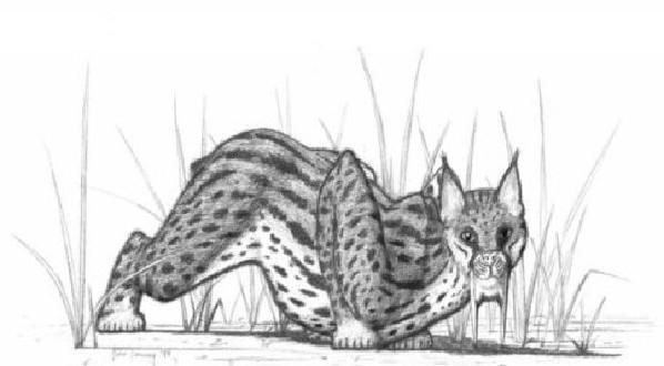 盘点已灭绝的25种史前生物