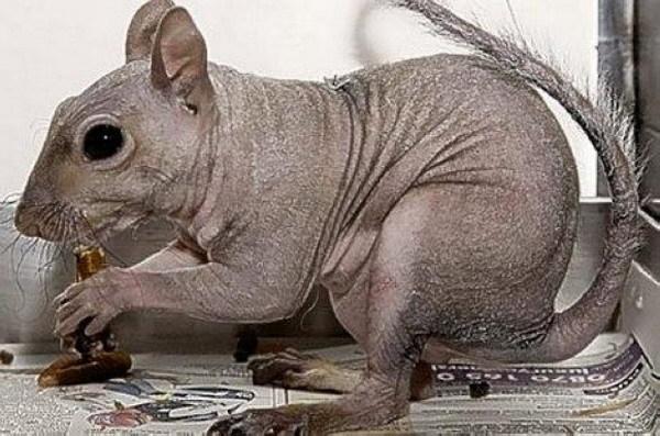 盘点全世界怪异的 裸体动物
