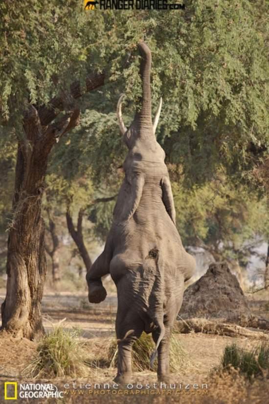 大象树叶贴画作品