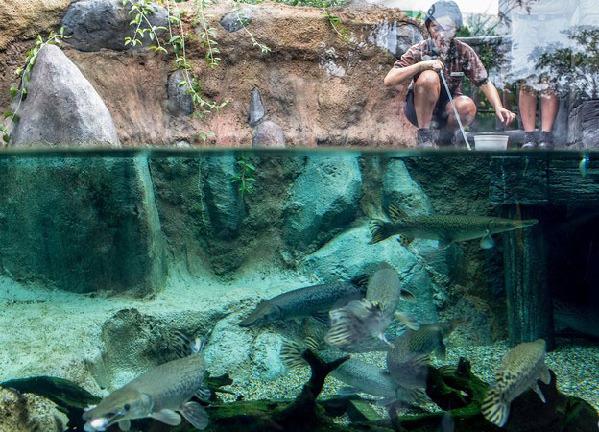 新加坡动物园员工在河川公园