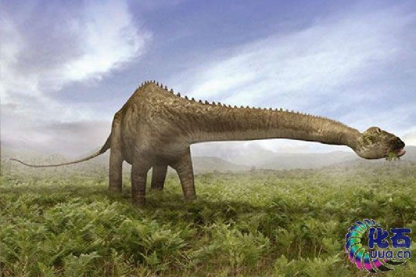 蜥脚类恐龙是沿着湖滨吃生长在地上的植物,而不是像长颈鹿一样吃树叶.