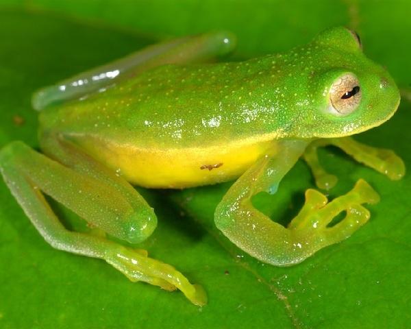 最新发现10大两栖物种 玛塔玛苔藓火蜥蜴